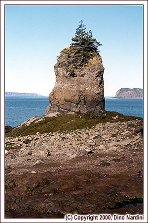 Flowerpot (Sea Stack), Partridge Island