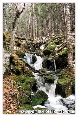 Spring Runoff, Cobequid Mountains