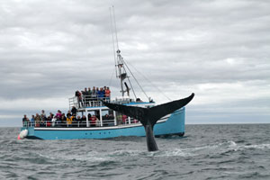 Mariner Cruises Whale Tours