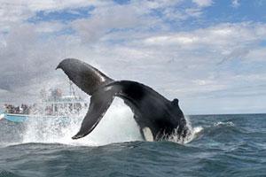 Explore Nova Scotia Canada Tourism And Travel Guide